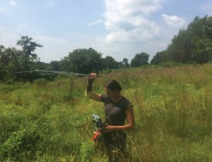 Tracking Bog Turtle with Telemetry