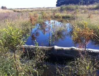 Airport Off-Site Wetland Mitigation