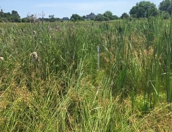 Schucks Park Wetland Mitigation